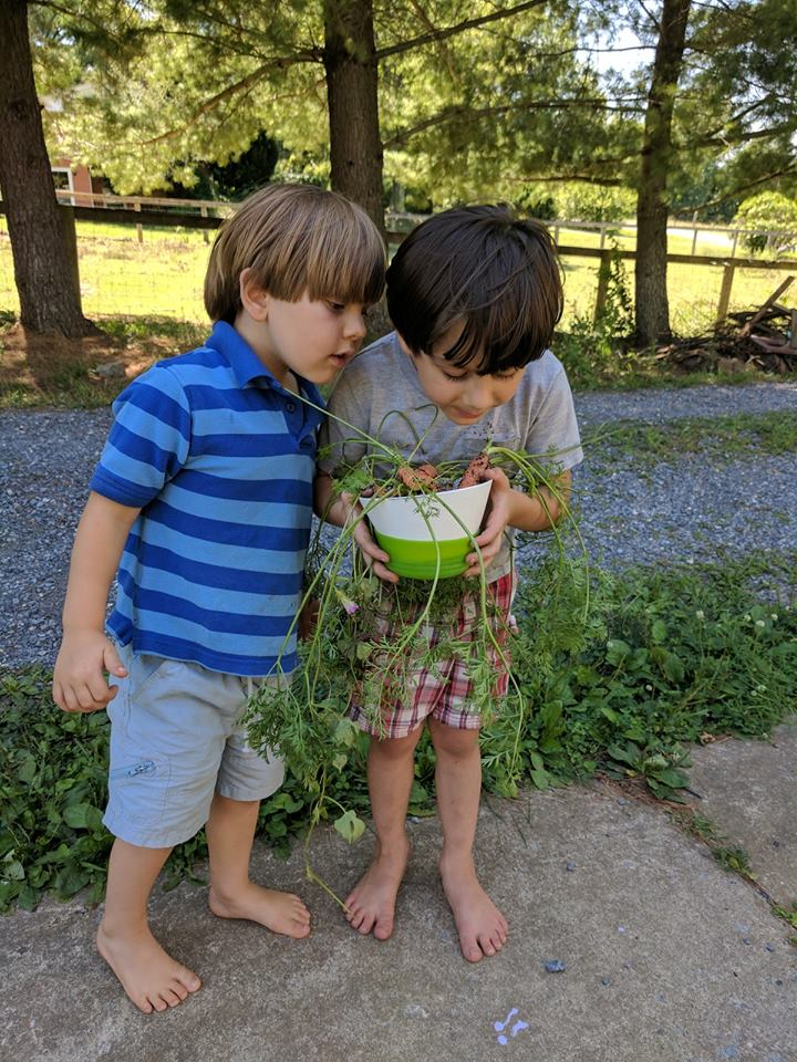 boys looking at plants
